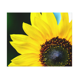 Hello Sunshine Sunflower Stretched Canvas Print
