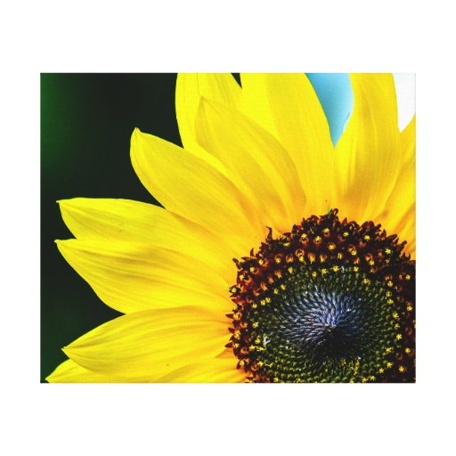 Hello Sunshine Sunflower Stretched Canvas Print