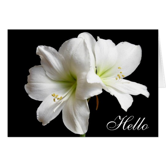 Hello White Lily Flower Greeting Card on Black
