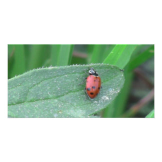 Hells Canyon Idaho Fauna Insects / Arachnids Picture Card