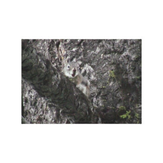 Hells Canyon Idaho Fauna Mammals Canvas Prints