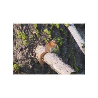 Hells Canyon Idaho Fauna Mammals Stretched Canvas Prints