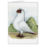 Helmet:  Red Pigeon Note Card