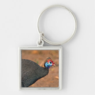 Helmeted Guinea Fowl (Numida meleagris). Africa, Silver-Colored Square Key Ring