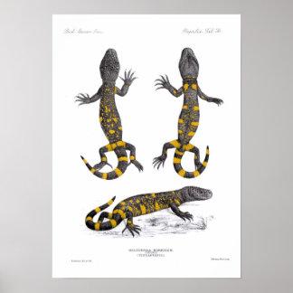 Heloderma Horridum (Beaded Lizard) Poster