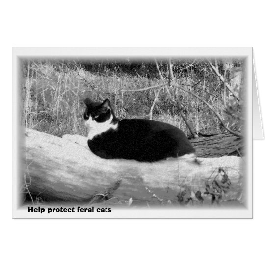 Help protect feral cats card