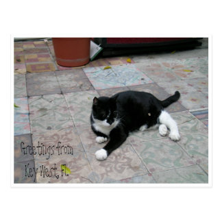 Hemingway House Kitty Postcard
