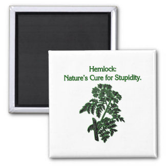 Hemlock: Cure For Stupidity Square Magnet