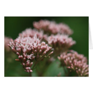 Hemp agrimony greetings card
