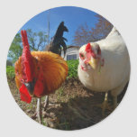 hen and rooster round stickers