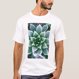 Hen & Chicks succulent with frost in the early T-Shirt