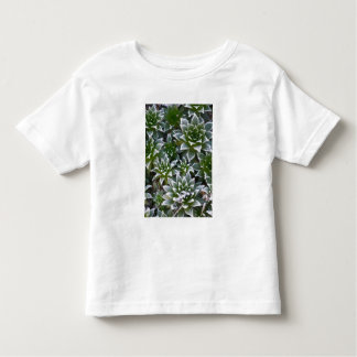 Hen & Chicks succulent with frost in the early Toddler T-Shirt