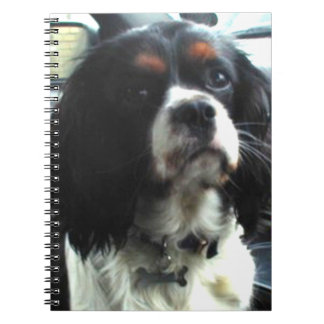 Henry, Cavalier King Charles Spaniel Notebook