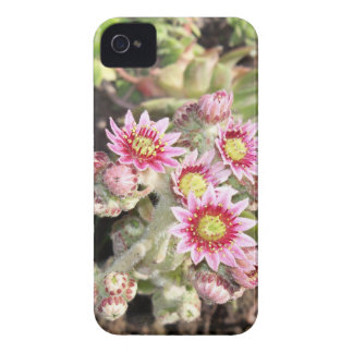 Hens and Chicks Flowers iPhone 4 Cover