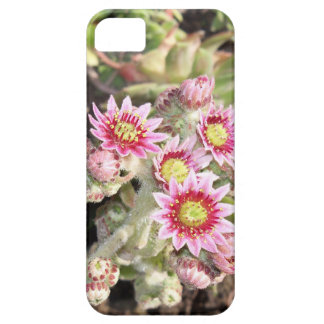 Hens and Chicks Flowers iPhone 5 Covers