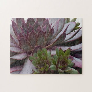 Hens And Chicks Jigsaw Puzzle