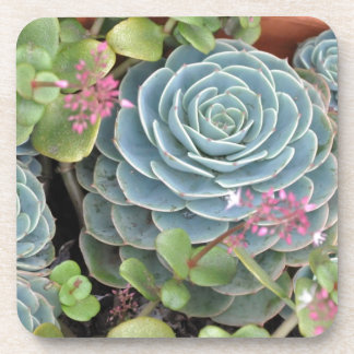 Hens and Chicks Plant Coaster