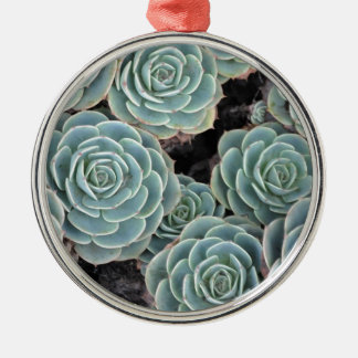 Hens and Chicks Plant Silver-Colored Round Decoration