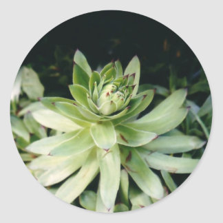 Hens and Chicks Stickers
