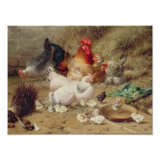 Hens roosting with their chickens posters