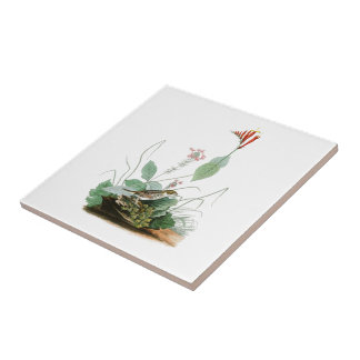 Henslow's Bunting John Audubon Birds of America Small Square Tile