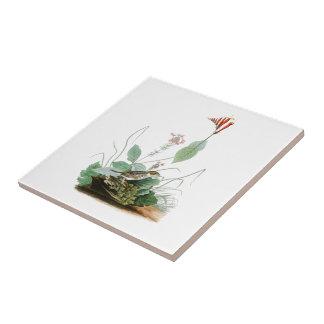 Henslow's Bunting John Audubon Birds of America Tile