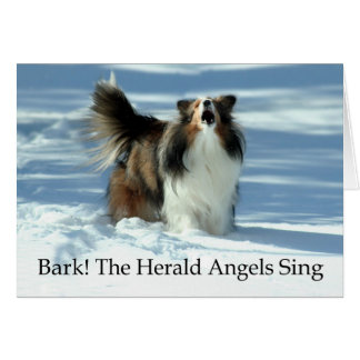 Herald Sheltie Greeting Card