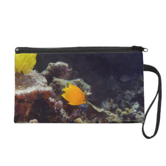 Herald's angelfish (Centropyge heraldi) swimming Wristlet Purse