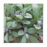 Herb collection sage photograph art small square tile