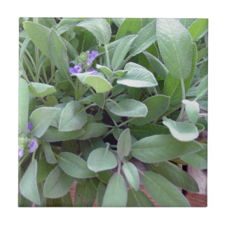 Herb collection sage photograph art tile
