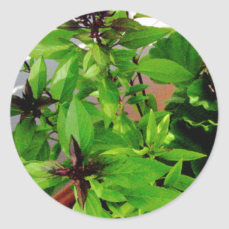 Herb collection Thai Basil photograph art Round Stickers