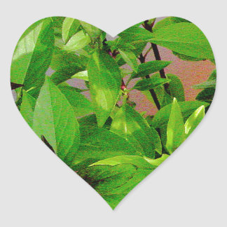 Herb collection Thai Basil photograph art Heart Sticker