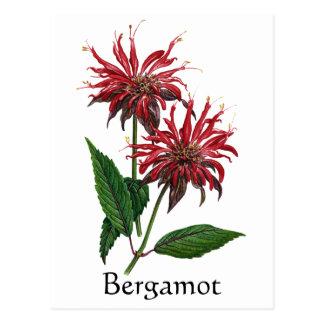 Herb Garden Series - Bergamot Postcard