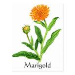 Herb Garden Series - Marigold Postcard