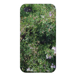 Herb Plant Case For iPhone 4