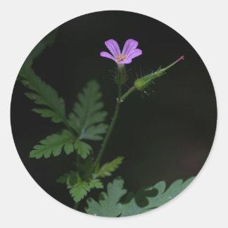 Herb Robert Geranium Wildflower Round Stickers