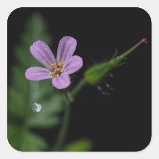 Herb Robert Geranium Wildflower Square Stickers