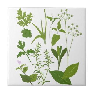 Herbs Collection Kitchen Tile