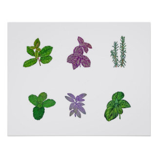 Herbs in watercolour poster