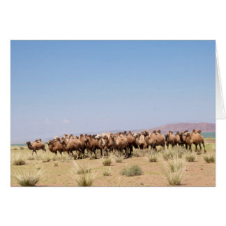 Herd of Bactrian Camels Card