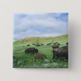 Herd of bison graze prairie grass at Theodore 15 Cm Square Badge