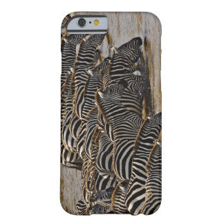 Herd of Burchell's Zebras drinking from Mara Barely There iPhone 6 Case