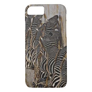 Herd of Burchell's Zebras drinking from Mara iPhone 8/7 Case