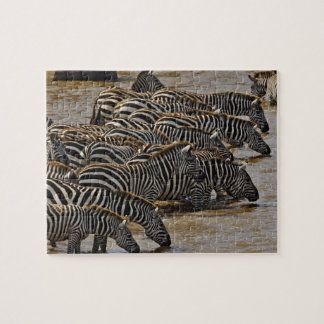 Herd of Burchell's Zebras drinking from Mara Jigsaw Puzzle