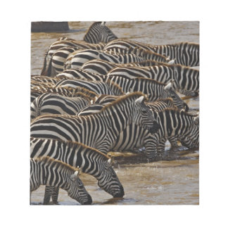Herd of Burchell's Zebras drinking from Mara Notepad