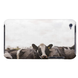 Herd of cattle and overcast sky 2 iPod touch case