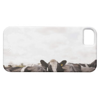 Herd of cattle and overcast sky case for the iPhone 5
