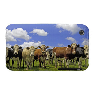 Herd of cattle and overcast sky iPhone 3 case