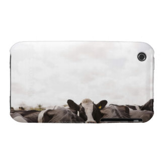 Herd of cattle and overcast sky iPhone 3 Case-Mate cases