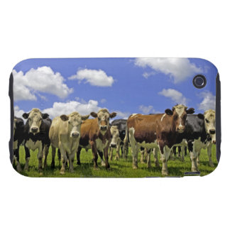 Herd of cattle and overcast sky iPhone 3 tough covers